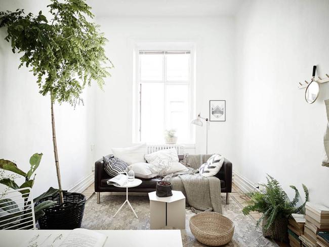 Des plantes dans un appartement for Plante appartement