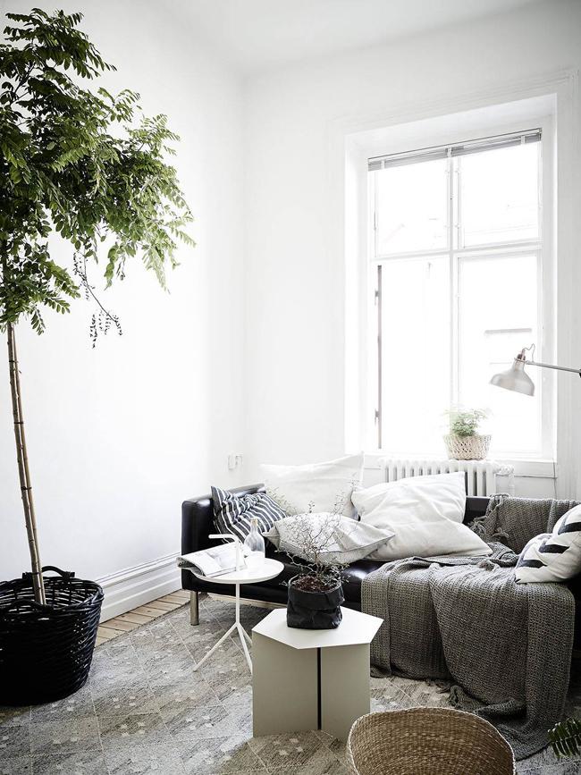 des plantes dans un appartement. Black Bedroom Furniture Sets. Home Design Ideas
