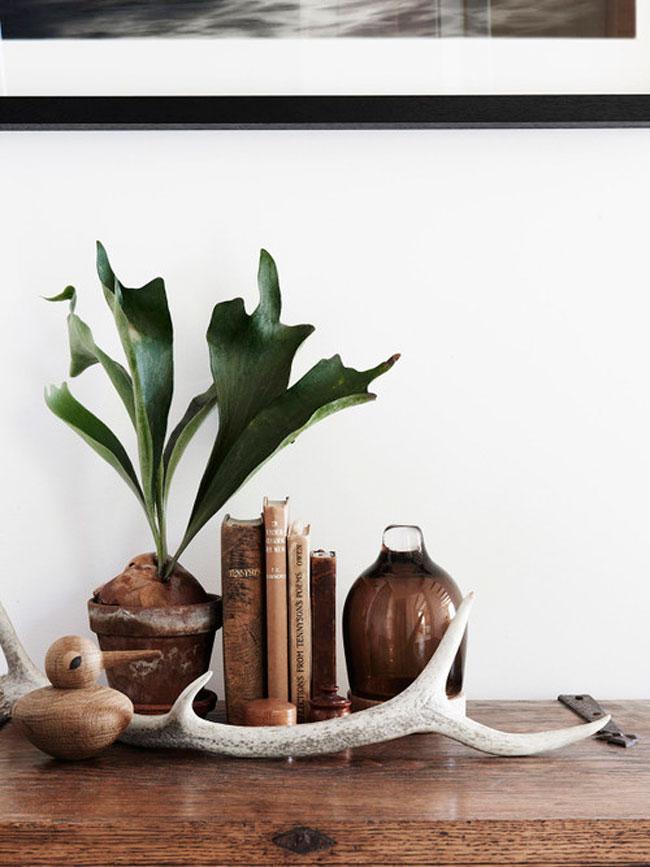Plantes en decoration
